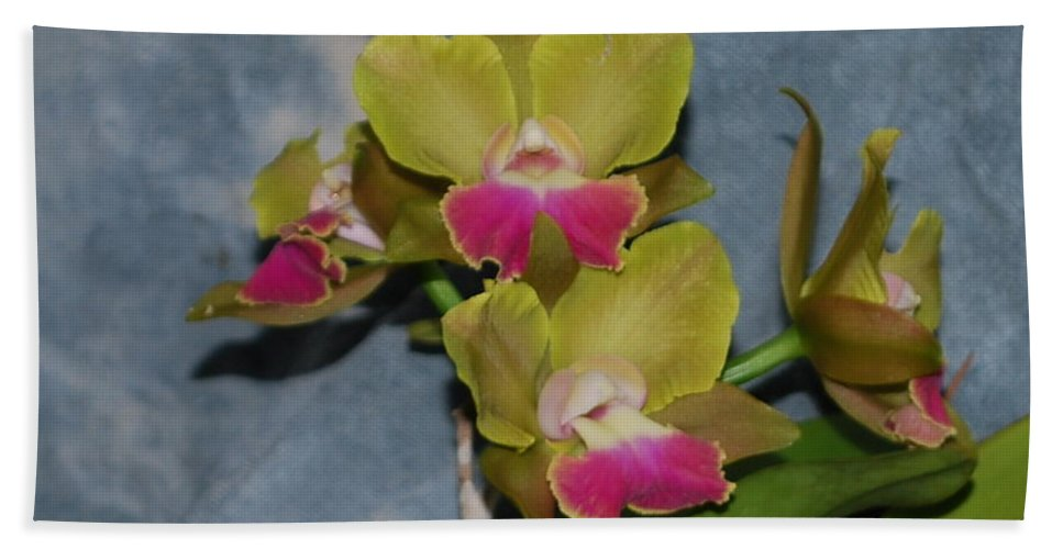 Home Grown Beach Towel featuring the photograph Orchid by Robert Floyd