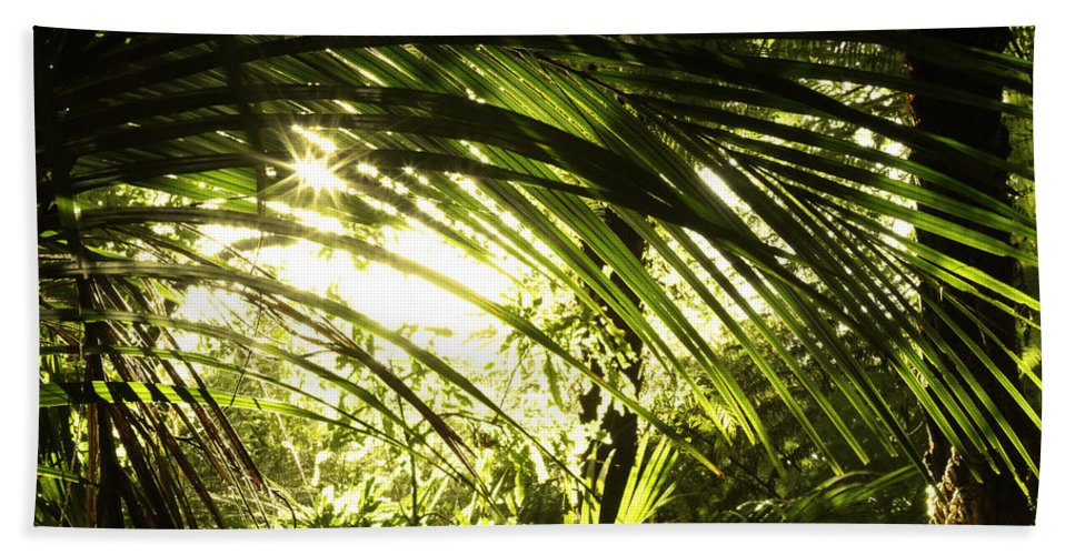 Bush Beach Towel featuring the photograph Tropical Forest by Les Cunliffe