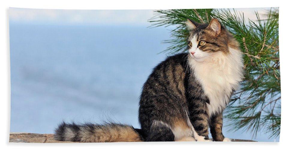 Cat Beach Towel featuring the photograph Cat In Hydra Island by George Atsametakis