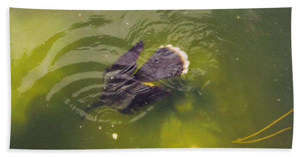 Lakes Park Inft.myers Beach Towel featuring the photograph Anhinga Or Snake Bird by Robert Floyd