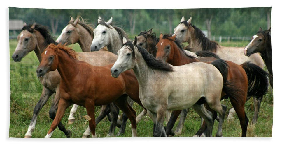 Horse Beach Towel featuring the photograph Arabian Horses by Angel Ciesniarska