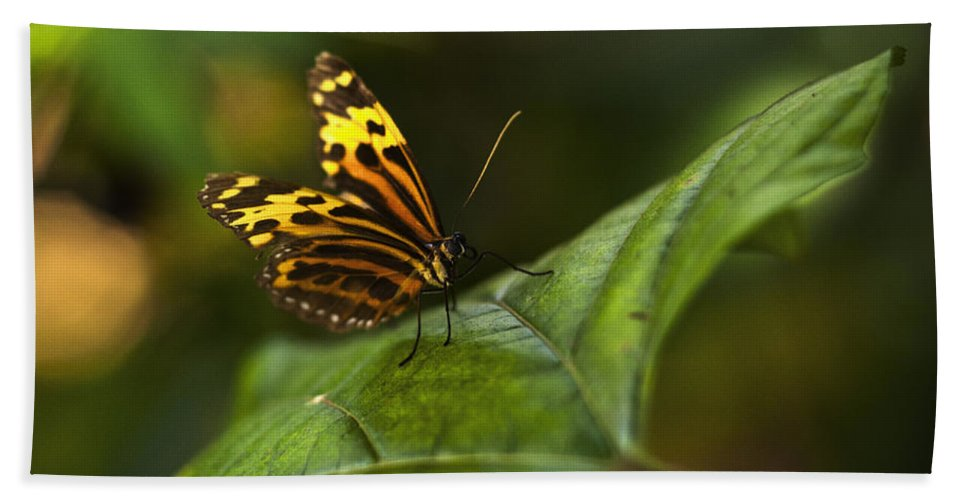 Butterfly Beach Towel featuring the photograph Butterfly by Bradley R Youngberg