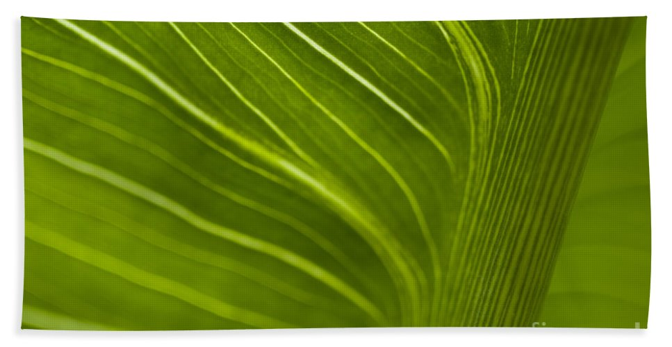 Beauty Beach Towel featuring the photograph Calla Lily Stem Close Up by Jim Corwin