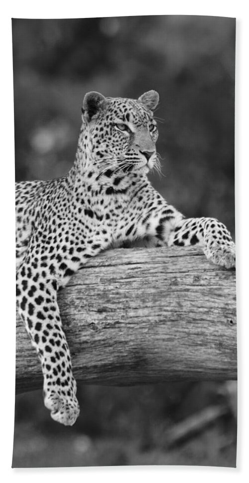 Africa Beach Towel featuring the photograph Dignity by Michele Burgess