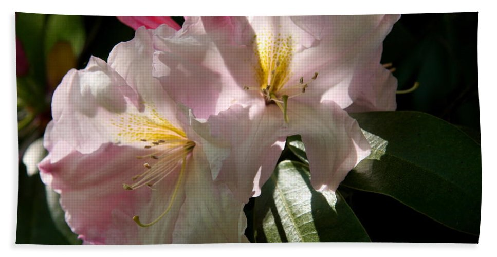 Pink Rhododendron Beach Towel featuring the photograph Glowing Pink by Christiane Schulze Art And Photography