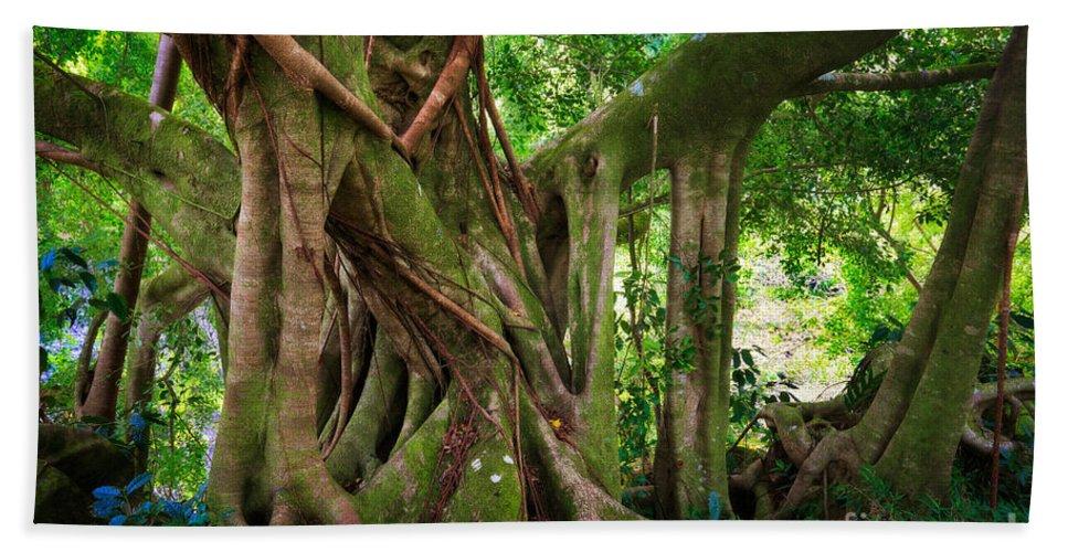 America Beach Towel featuring the photograph Kipahulu Banyan Tree by Inge Johnsson