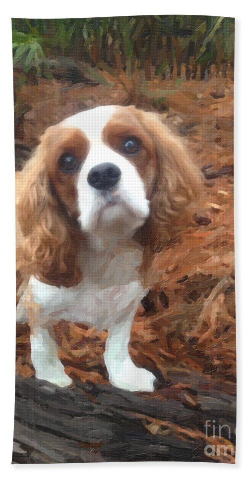 Cavalier King Charles Spaniel Beach Towel featuring the photograph On The Hunt by Dale Powell