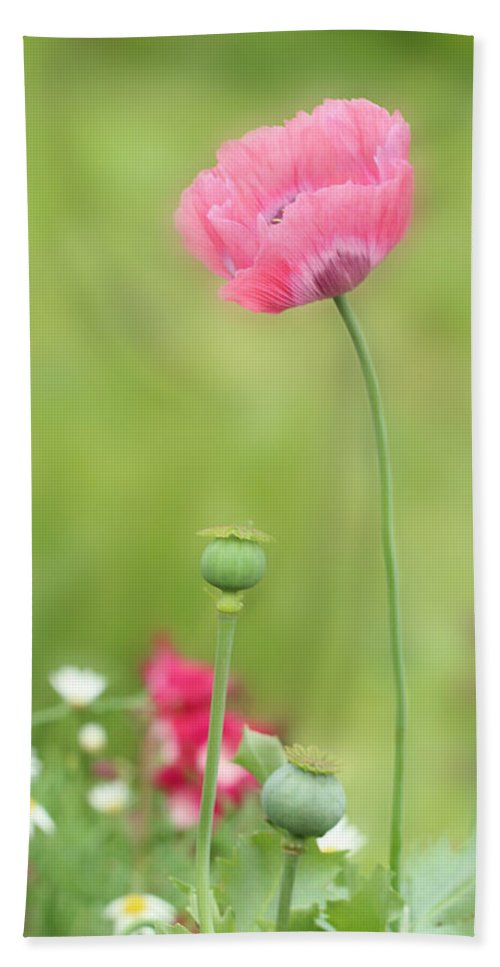 Poppy Beach Towel featuring the photograph Poppy by Heike Hultsch