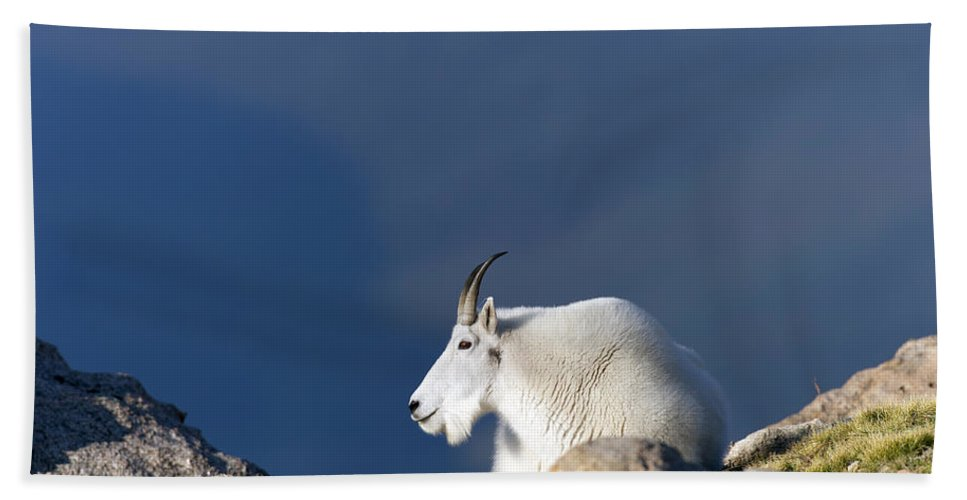 Rocky Beach Towel featuring the photograph Rocky Mountain Goat by Gary Langley