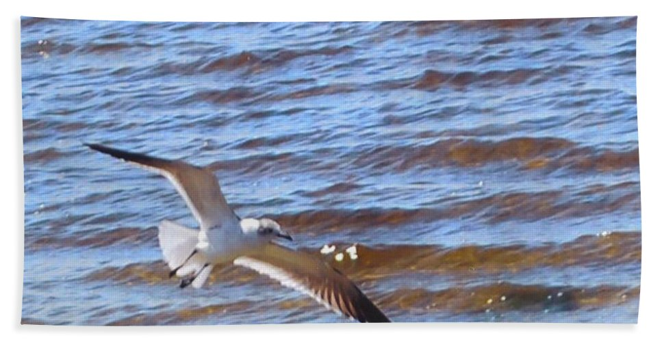 Flying In The Surf Beach Towel featuring the photograph Seagull by Robert Floyd