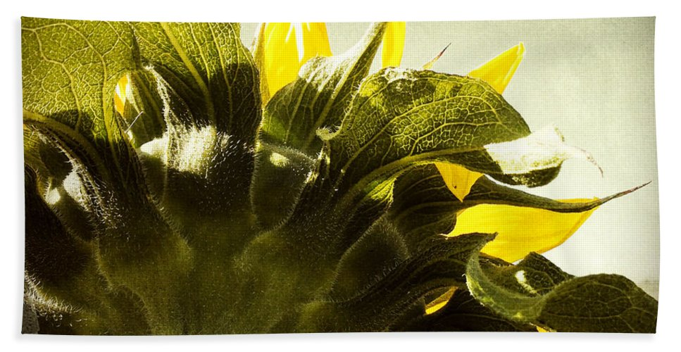 Sky Beach Towel featuring the photograph Sunflower by Les Cunliffe