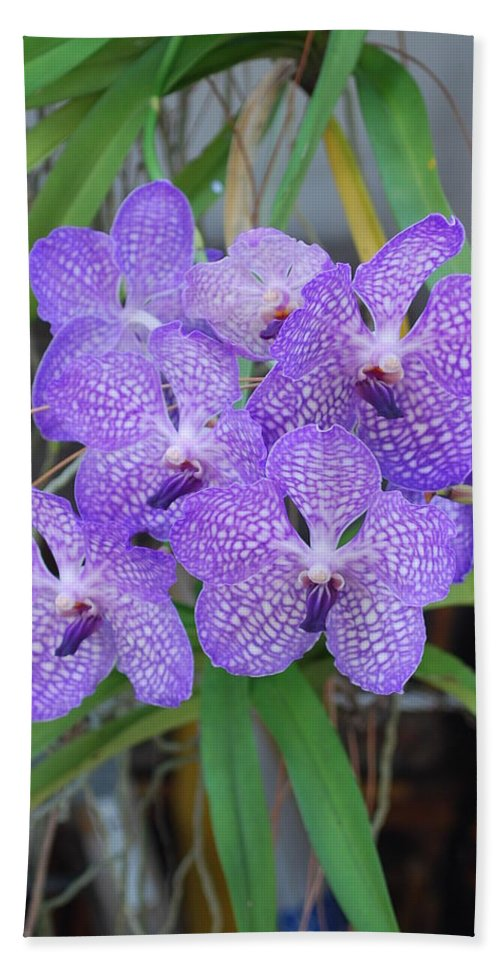 Grown At Home Beach Towel featuring the photograph Vanda Orchid by Robert Floyd