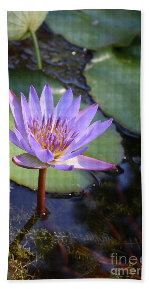 Purple Beach Towel featuring the photograph Blue Water Lily by Irina Davis