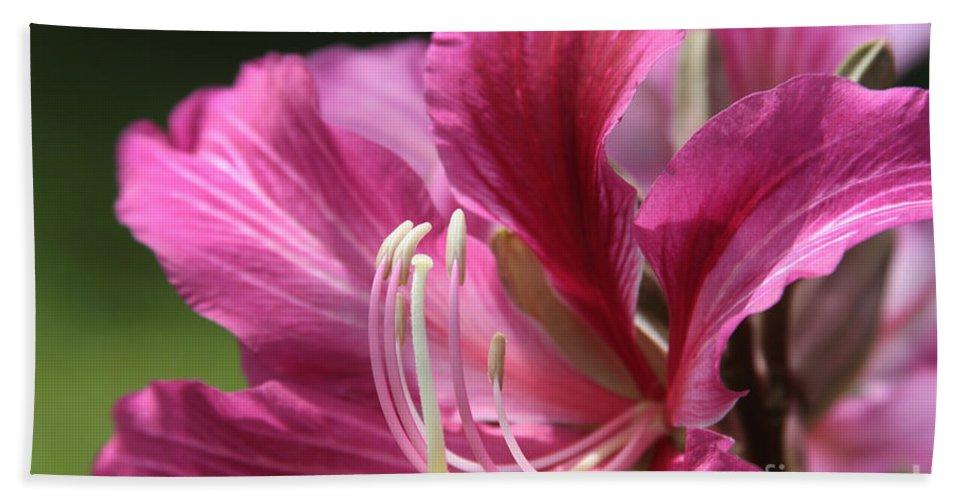Aloha Beach Towel featuring the photograph Bauhinia Blakeana - Hong Kong Orchid - Hawaiian Orchid Tree by Sharon Mau