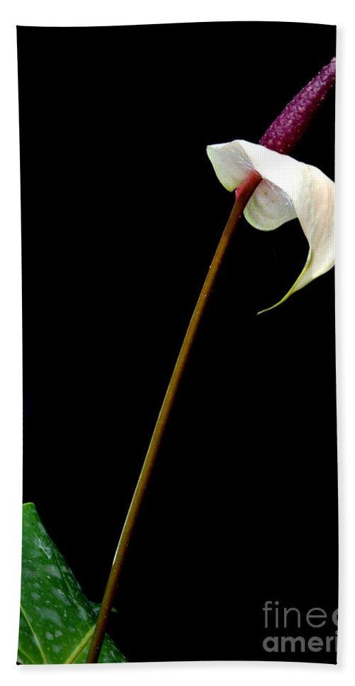 Anthurium Beach Towel featuring the photograph Flamingo Flower by Antoni Halim