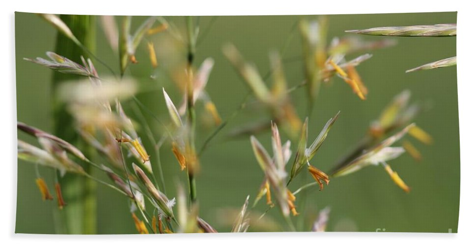 Mccombie Beach Towel featuring the photograph Flowering Brome Grass by J McCombie
