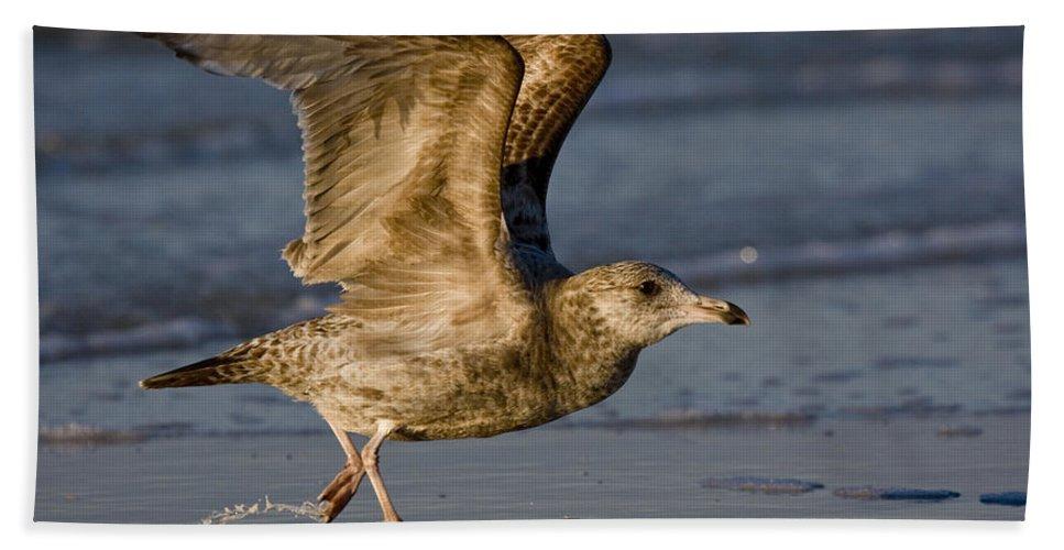 Gull Beach Towel featuring the photograph Gull by Sandy Swanson