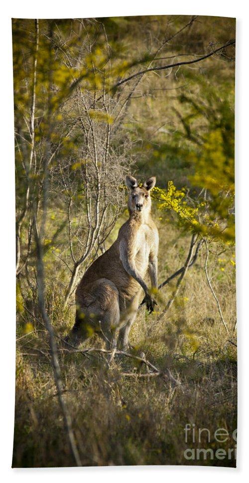 Animal Beach Towel featuring the photograph Kangaroo by Tim Hester
