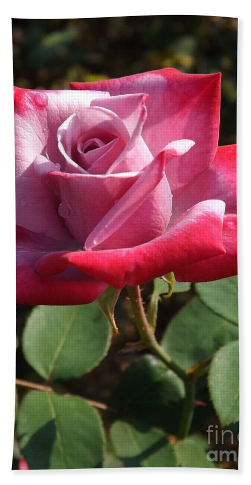 Love Beach Towel featuring the photograph Paradise Rose by Sara Raber