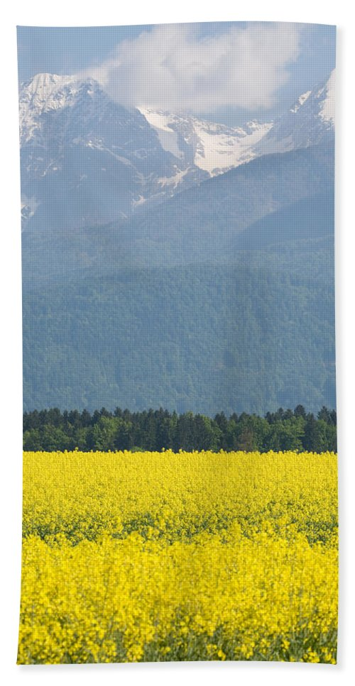 Brnik Beach Towel featuring the photograph rapeseed field in Brnik with Kamnik Alps in the background by Ian Middleton