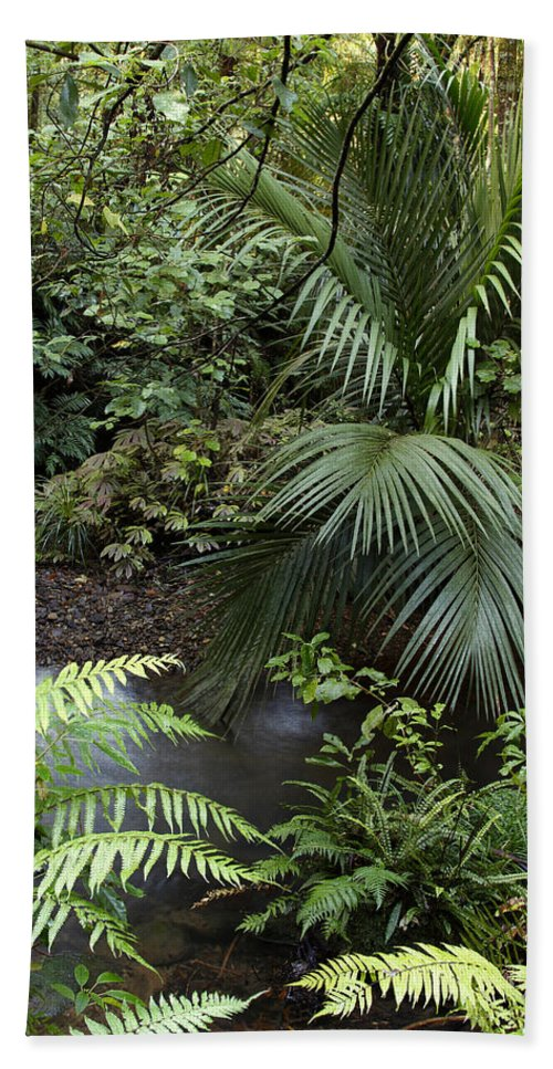 Tropics Beach Towel featuring the photograph Tropical Forest by Les Cunliffe