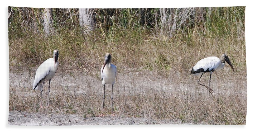 You Guys Keep A Look Out. Beach Towel featuring the photograph Wood Storks by Robert Floyd