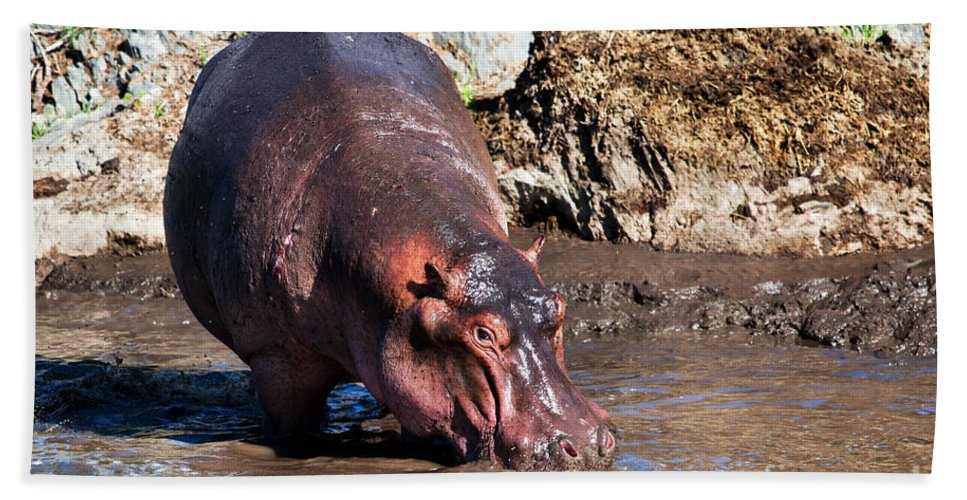 Hippo Beach Towel featuring the photograph Hippopotamus In River. Serengeti. Tanzania by Michal Bednarek