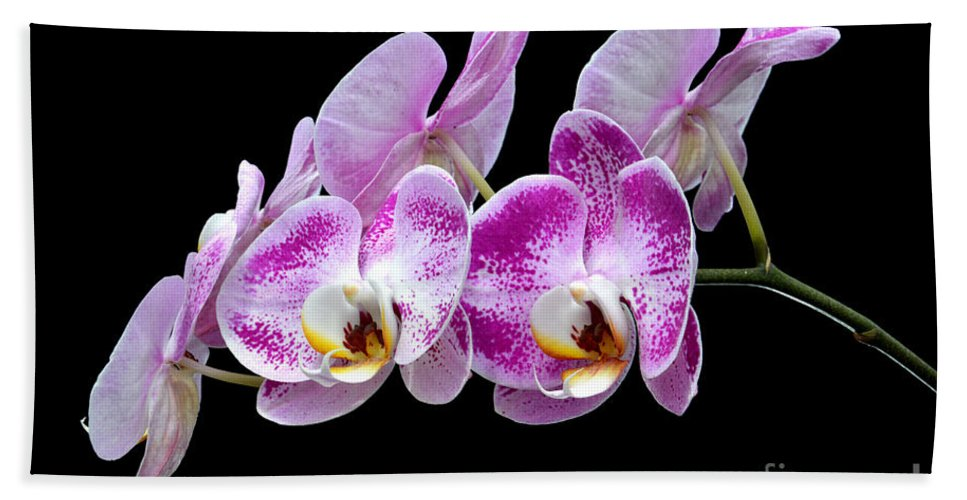 Flower Beach Towel featuring the photograph Moon's Orchid by Antoni Halim