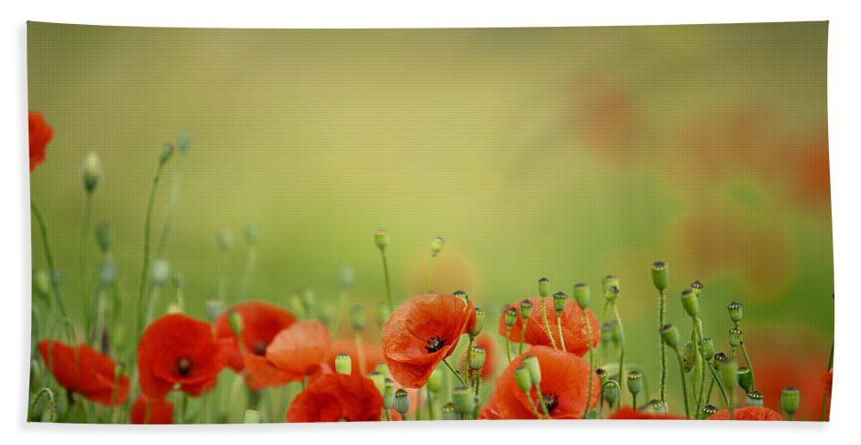 Poppy Beach Towel featuring the photograph Poppy Meadow by Nailia Schwarz