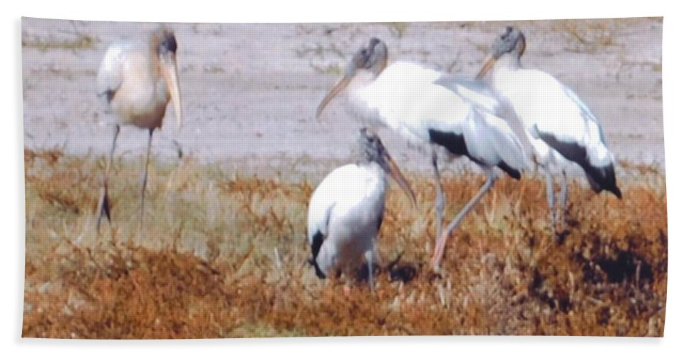 All Sit Down Beach Towel featuring the photograph Wood Storks by Robert Floyd
