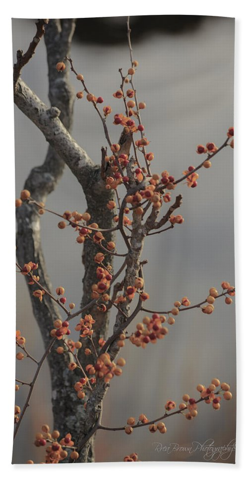 Nature Beach Towel featuring the photograph 569 by Rrea Brown