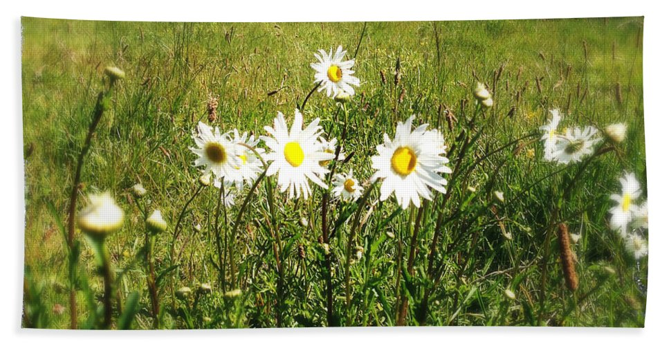 Beautiful Beach Towel featuring the photograph Daisies by Les Cunliffe