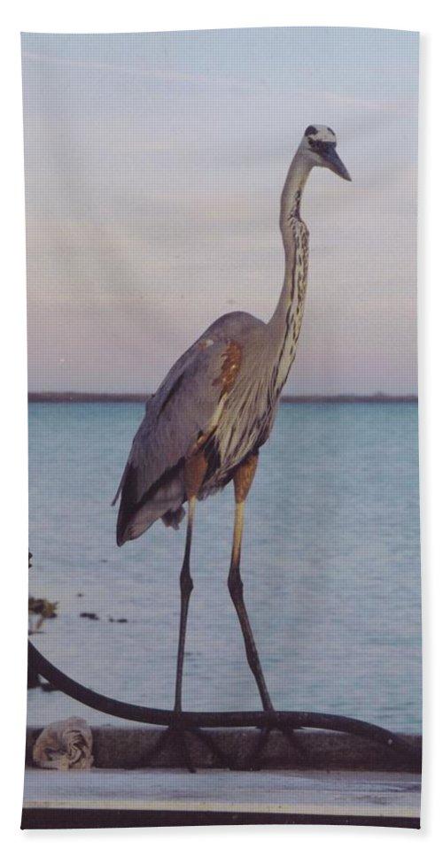 Matlascha Boat Dock Beach Towel featuring the photograph Great Blue Heron by Robert Floyd