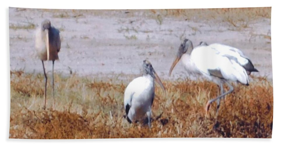 Are You Still Setting There? Beach Towel featuring the photograph Wood Storks by Robert Floyd