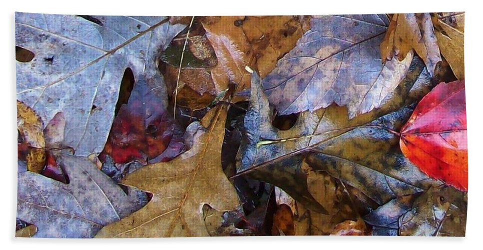 Color Fall Leaf Autumn Connecticut Rain New England Beach Towel featuring the photograph Colors Of The Fall by Wolfgang Schweizer