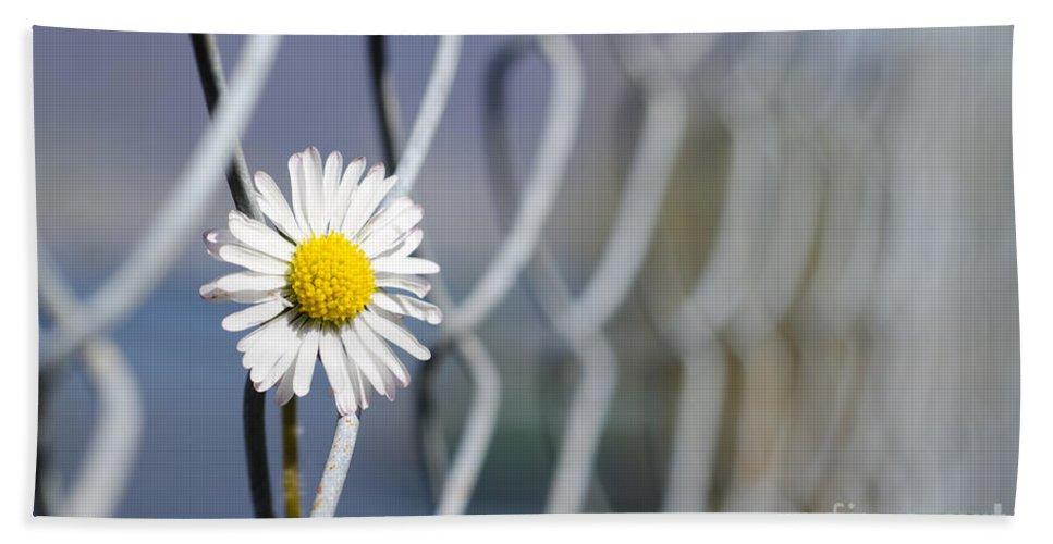 Flower Beach Towel featuring the photograph Daisy Flower by Mats Silvan