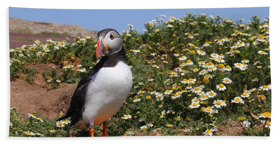 Puffin Beach Towel featuring the photograph Puffin by Traci Law