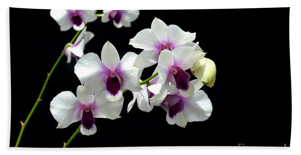 White Beach Towel featuring the photograph Dendrobium Orchid by Antoni Halim