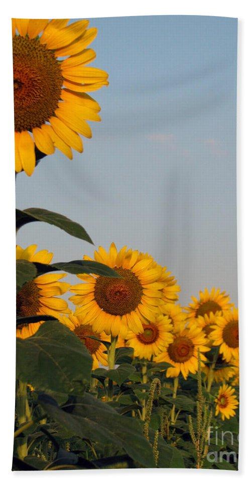 Sunflower Beach Towel featuring the photograph Sunflower series by Amanda Barcon