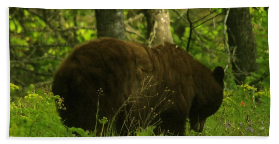Bears Beach Towel featuring the photograph A Big Bruin by Jeff Swan