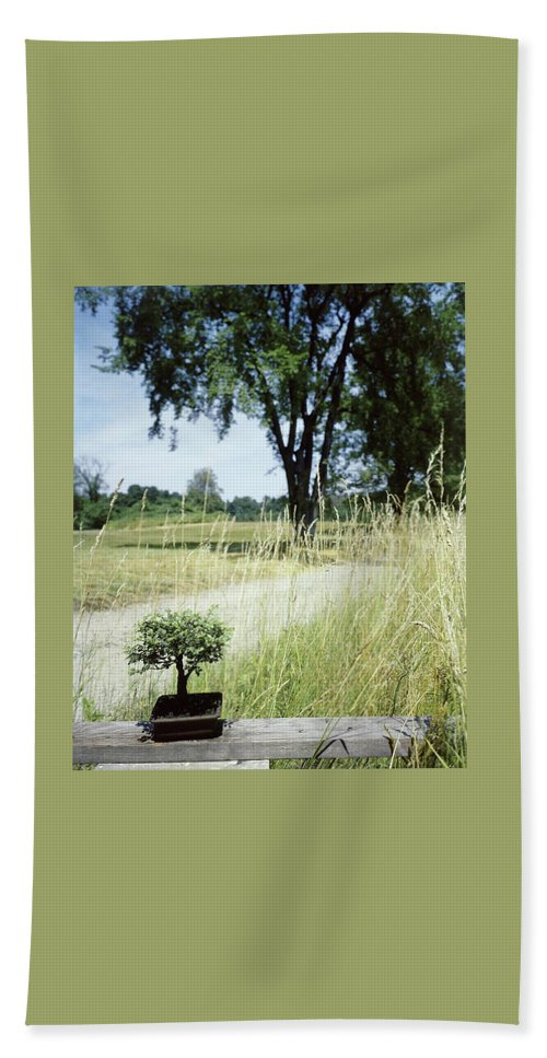 Plants Beach Towel featuring the photograph A Bonsai Tree In A Hayfield by Pedro E. Guerrero