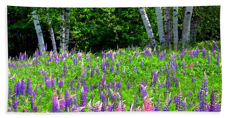 Lupine Beach Towel featuring the photograph A Breathless Moment Among Lupine by Wayne King