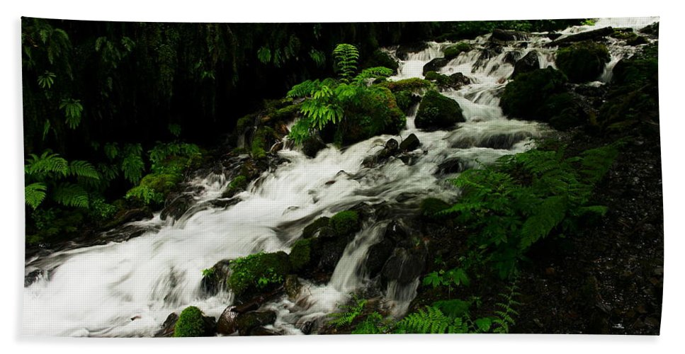 Ferns Beach Towel featuring the photograph A Fern On An Isalnd On Wahkeena Creek by Jeff Swan