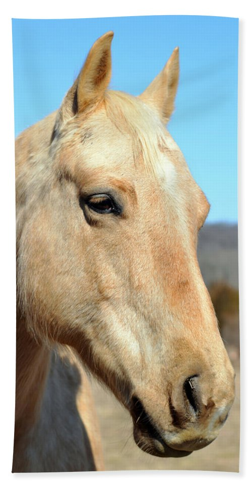 Horse Beach Towel featuring the photograph A Gentle Soul by Lori Tambakis