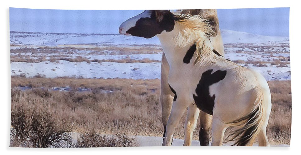 Mccullough Peaks Wild Mustang Beach Towel featuring the photograph A Hair Raising Experience by Elaine Haberland
