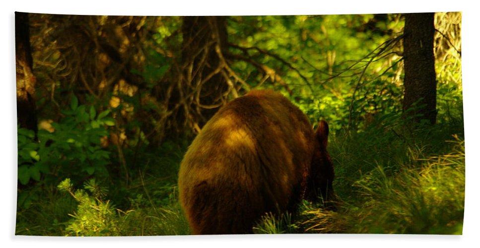 Bear Beach Towel featuring the photograph A Little Brown Bear by Jeff Swan
