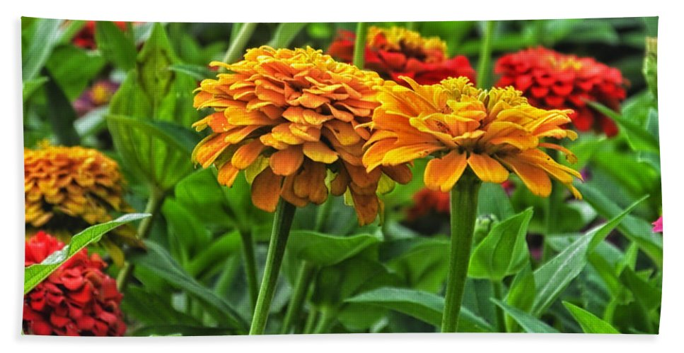 Floral Beach Towel featuring the photograph A Pair Of Yellow Zinnias 03 by Thomas Woolworth