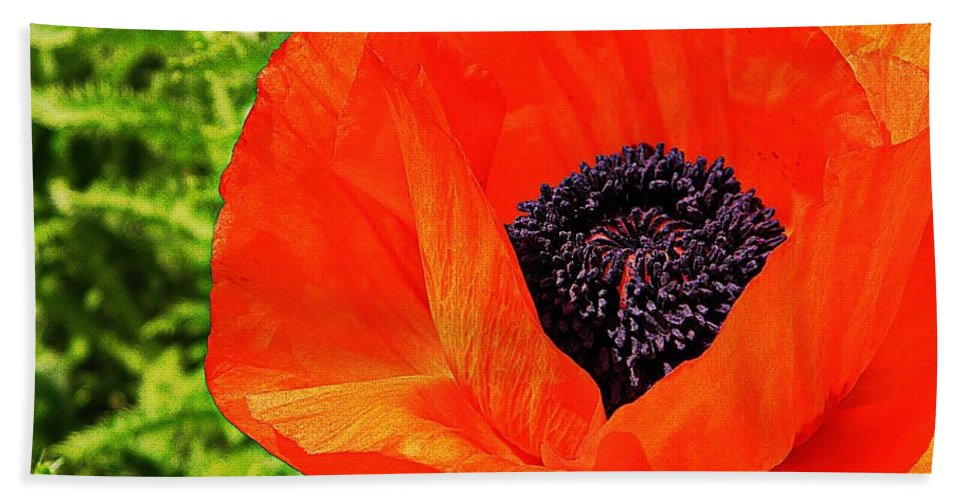 Poppy Beach Towel featuring the photograph A Peek Inside by Chris Berry