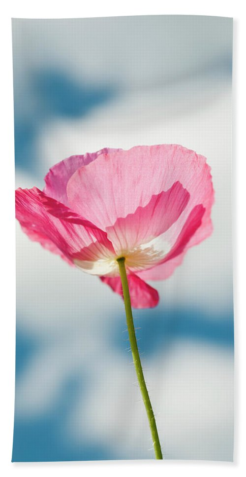 Cloud Beach Towel featuring the photograph A Pink Poppy Reaches For The Clouds by Robert L. Potts