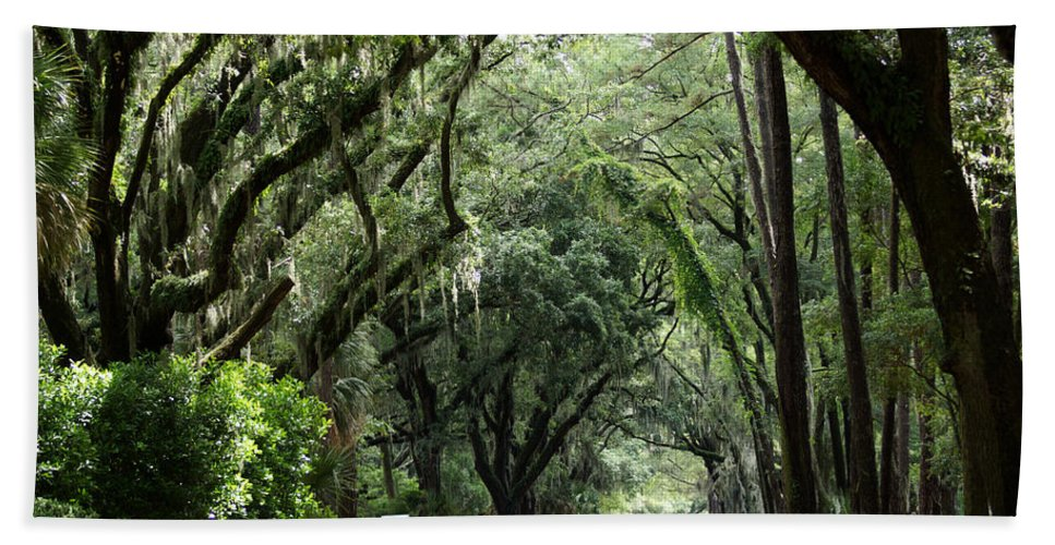 A Pretty Tree Covered Road Somewhere On Hilton Head Island Beach Towel featuring the photograph A Pretty Tree Covered Road Somewhere On Hilton Head Island by Kim Pate